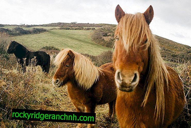 ม้าพันธุ์ต่าง ๆ