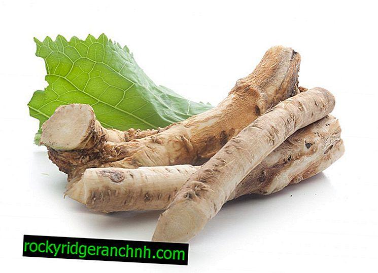 Je možné do krmiva králíků vnést křenové listy a stonky?