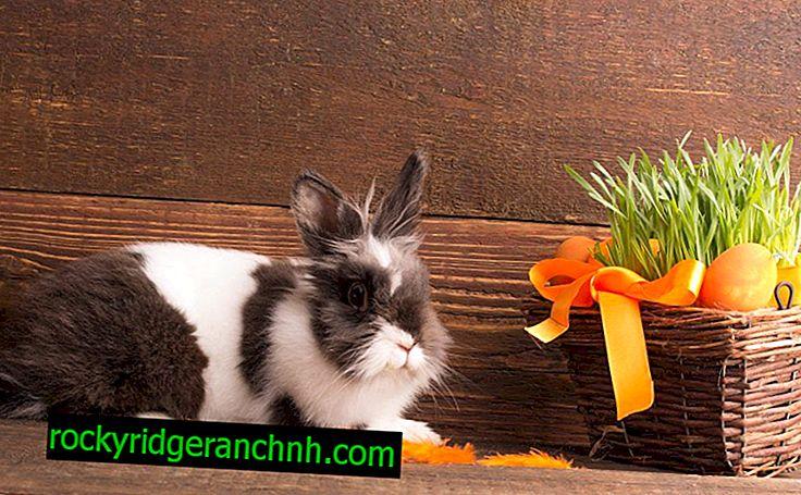 Životnosť králikov
