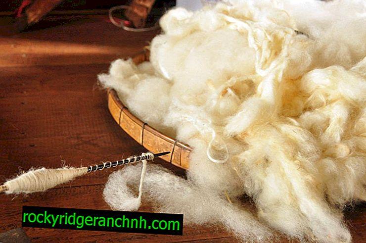 Kendinizi bir koyun derisi yıkamak için nasıl