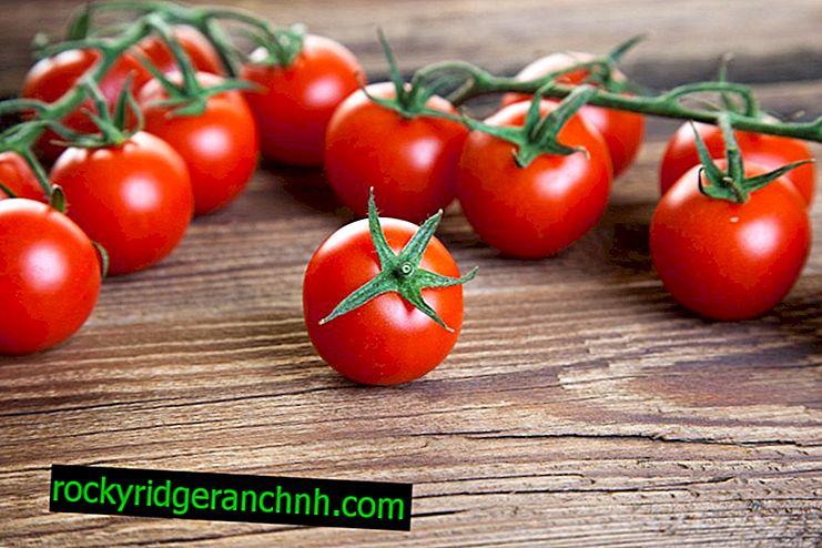 Descrição e características do tomate Olho de boi