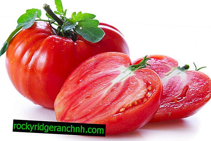 Beschreibung des Tomatenkönigs vom Markt
