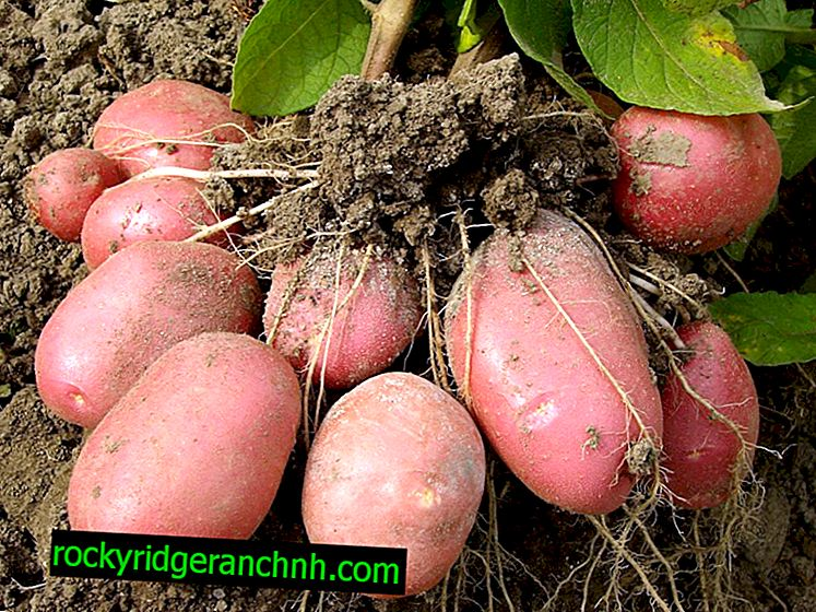 Beschrijving van Aardappelmanifest