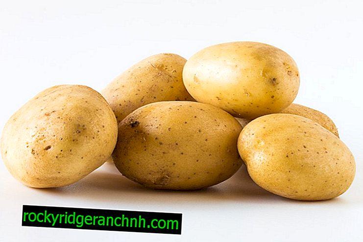 Características das batatas de agricultores