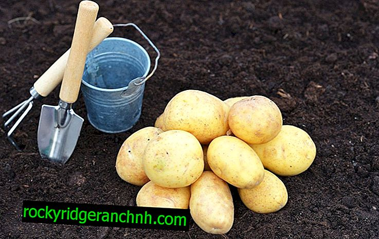 Description of Early Potato Varieties