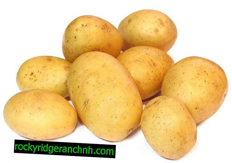 Karakteristike jela krumpira