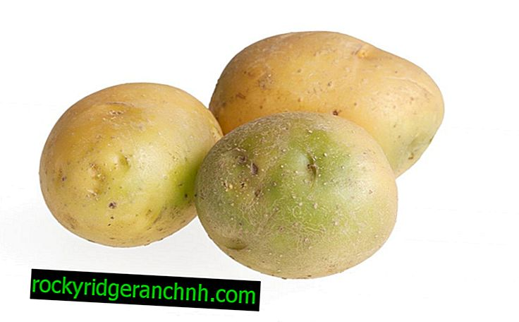 Yeşil patates