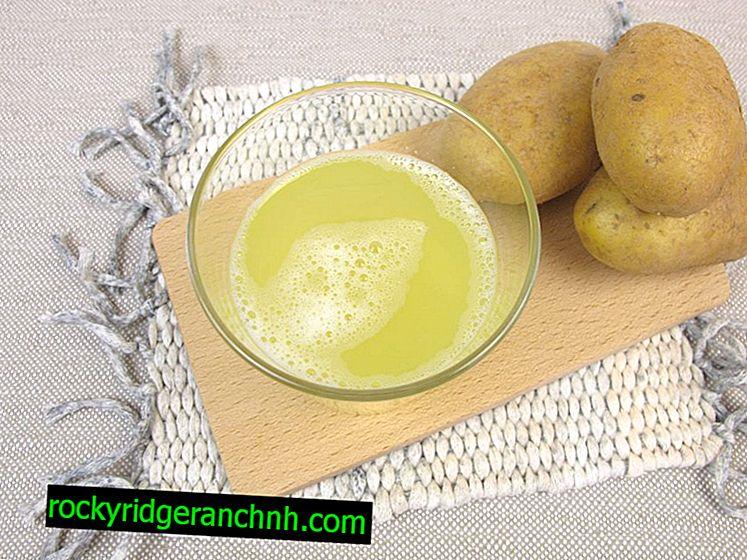 Корисні і шкідливі властивості картопляного соку
