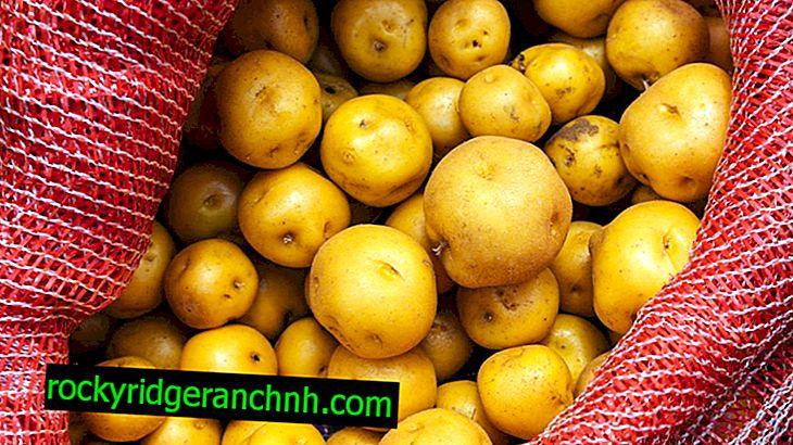 Beskrivning av Potato Vineta