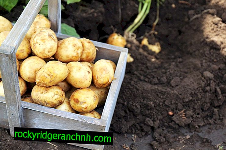 Ways to grow potatoes