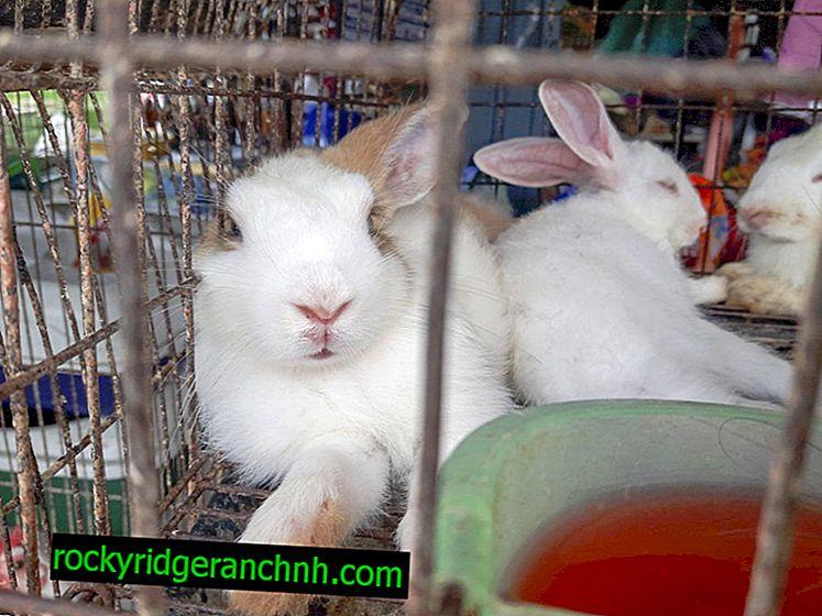 Les cages de l'appareil pour les lapins selon la méthode de Zolotukhin