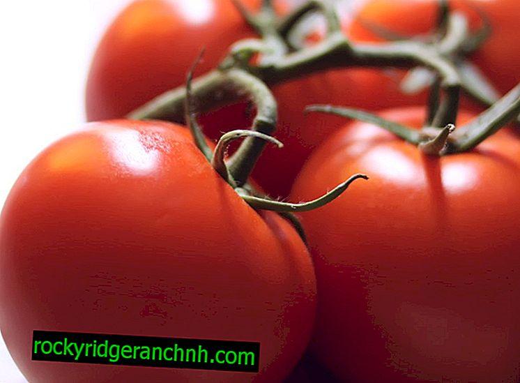 Mucize Piyasası domateslerinin özellikleri