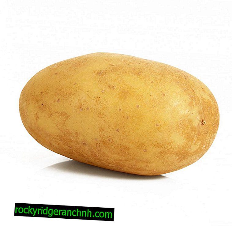 Patates Delikanlı açıklaması