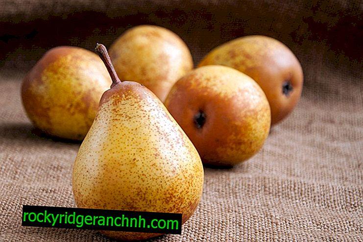 Características de las variedades de pera Thumbelina