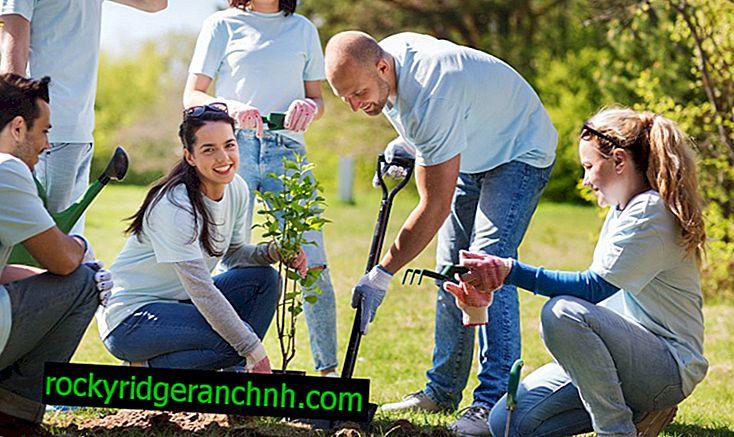 Règles pour planter des poires au printemps