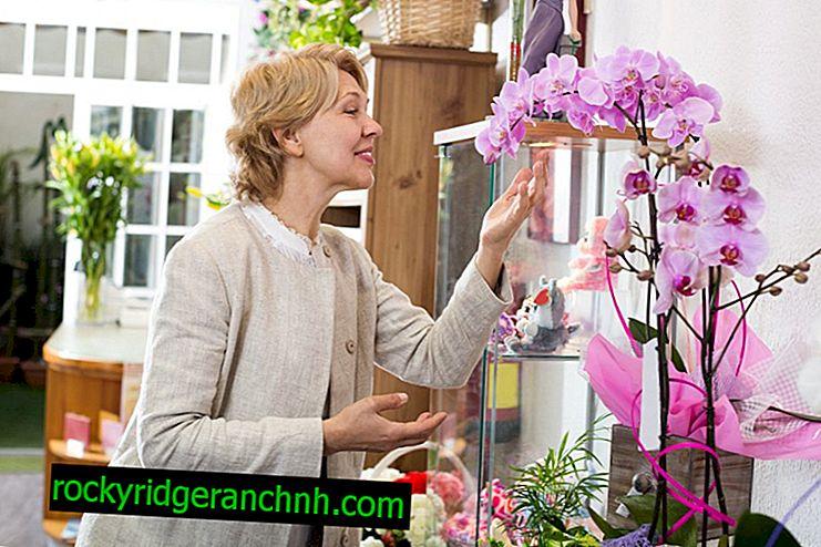 Regras para escolher uma orquídea