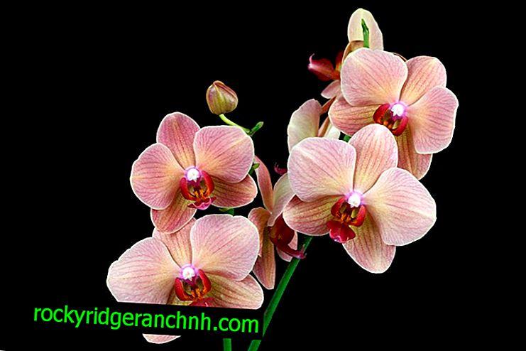Oprettelse af ekstra belysning til orkideer