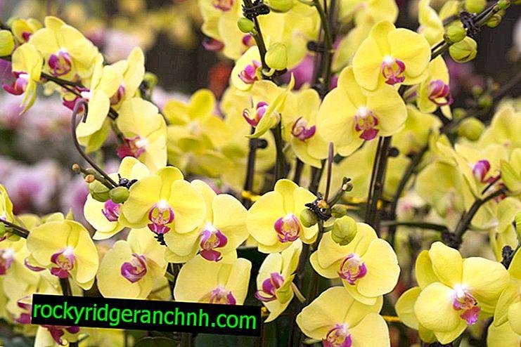 Orchid Restoration