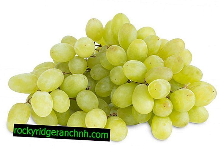Os benefícios e malefícios das uvas Kishmish