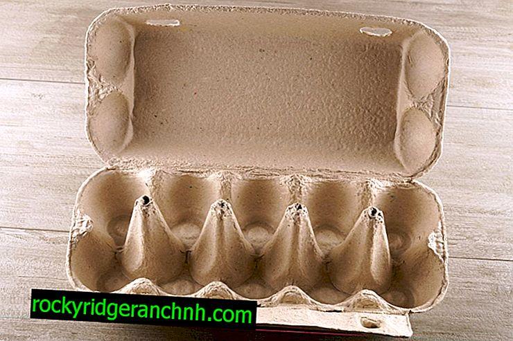 Jajne ćelije za sjetvu mrkve
