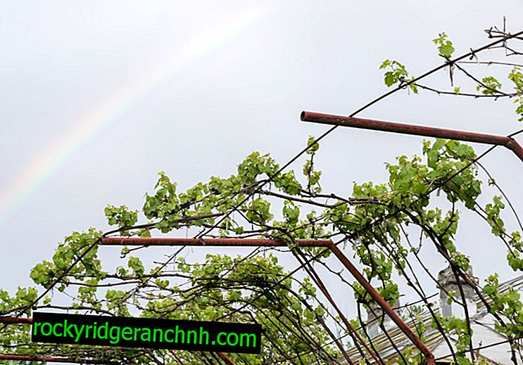 DIY canopy for grapes