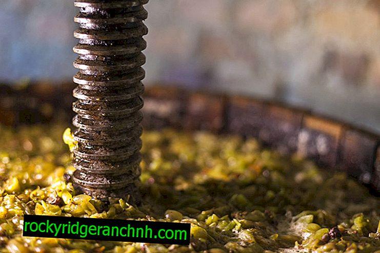 DIY grape press