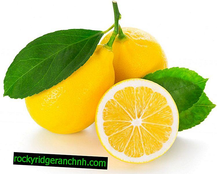 De voordelen en nadelen van citroen tijdens de zwangerschap