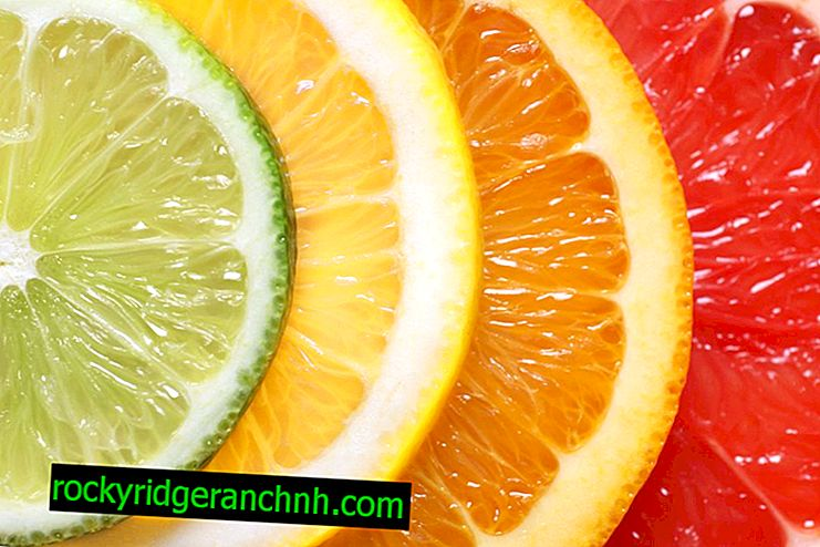 The benefits and harms of citrus during pregnancy