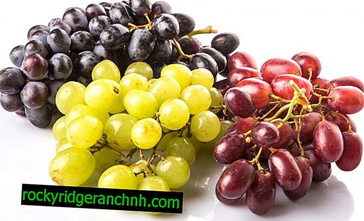 Belo ali črno grozdje je bolj zdravo