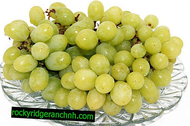 Karakteristika ved druer fra White Wonder