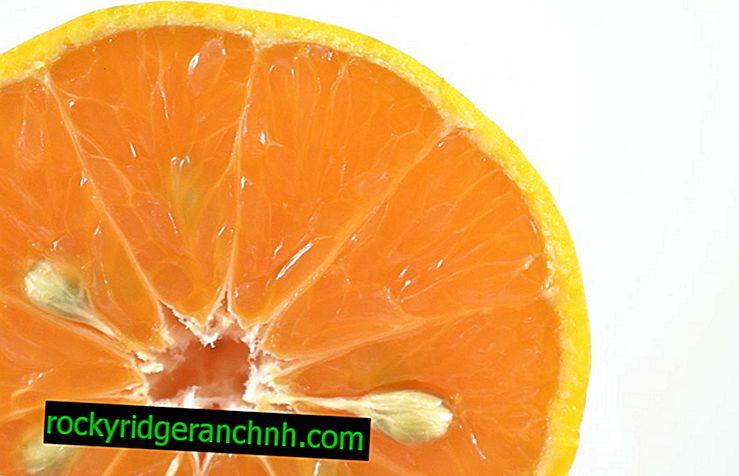Sundhedsmæssige fordele og skader på mandariner