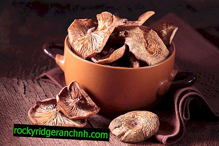Méthodes de fabrication de champignons séchés