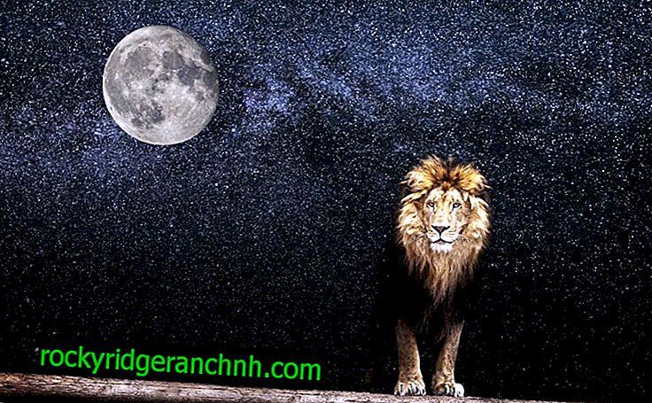 Wartość księżyca w Lwie