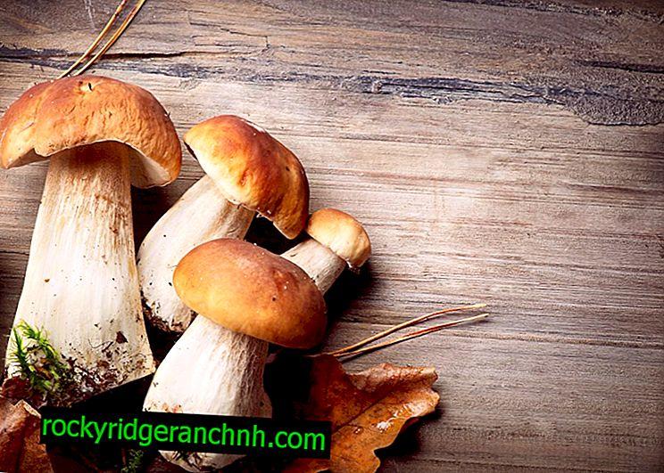 Mushroom Valui