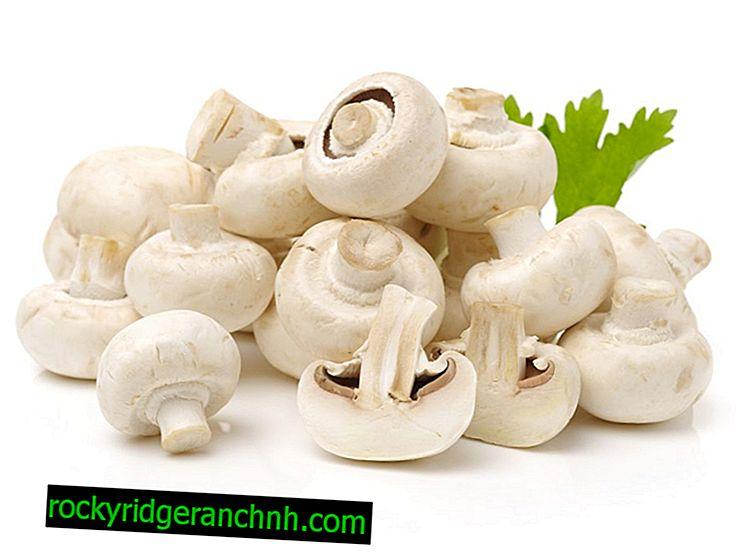 Quels champignons sont récoltés en juillet