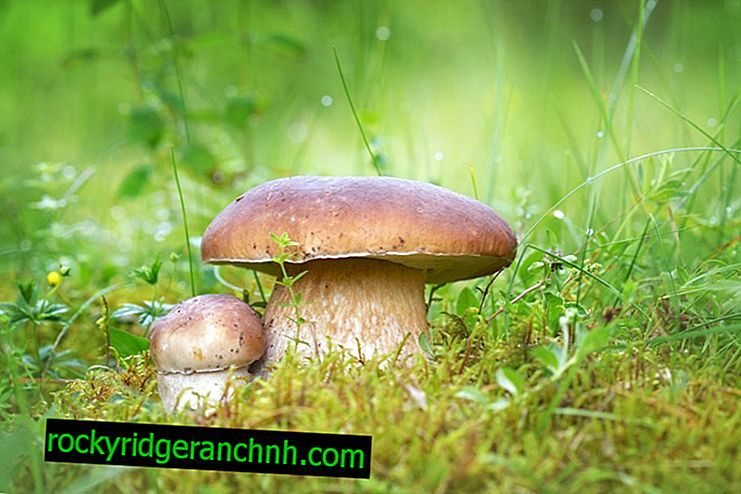 Pilze in der Region Vologda