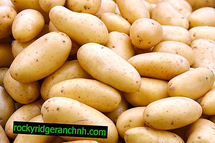 Използването на дресинг за картофи