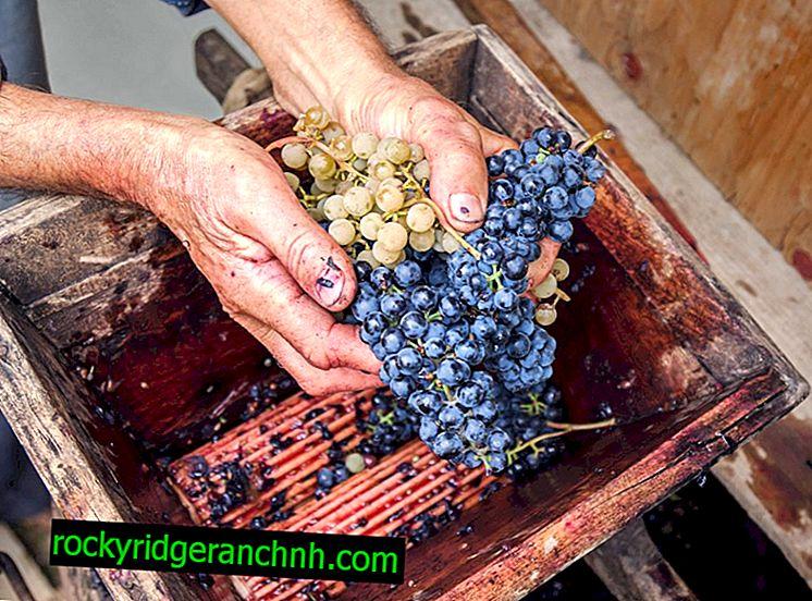 Kako narediti drobilnik grozdja sami