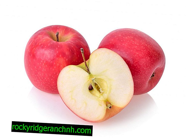 Growing an apple tree Pink Lady