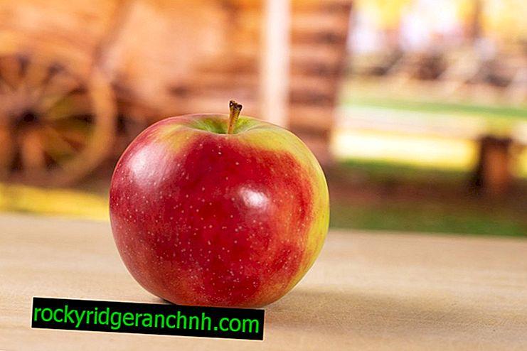 Varietal karakteristisk for æbletræet Skala