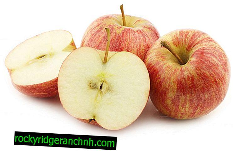 Przegląd późnych odmian jabłek