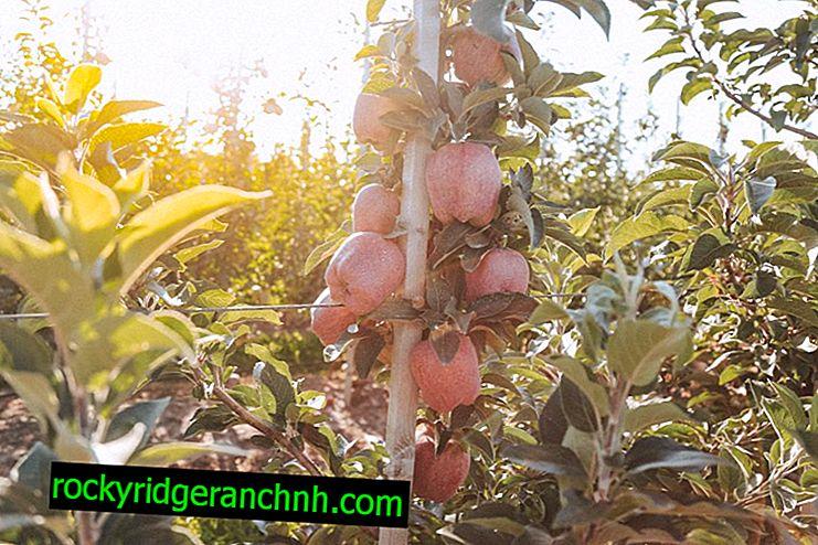 Appel groeit