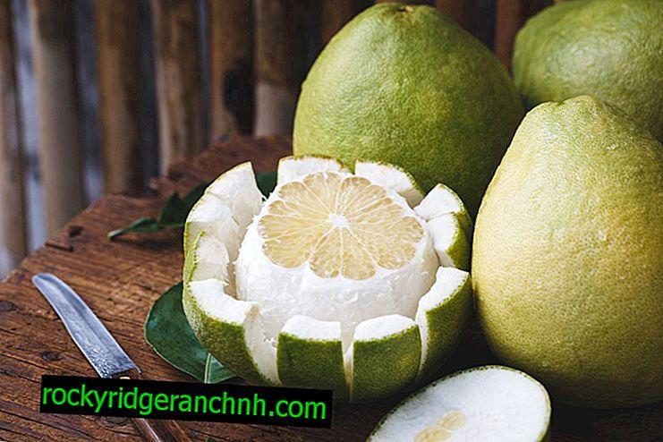 O pomelo ajuda a perder peso