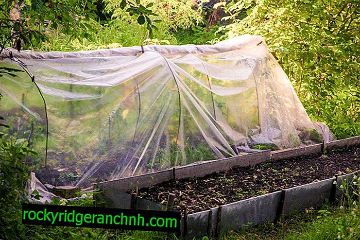 Jak udělat úkryt pro rajče