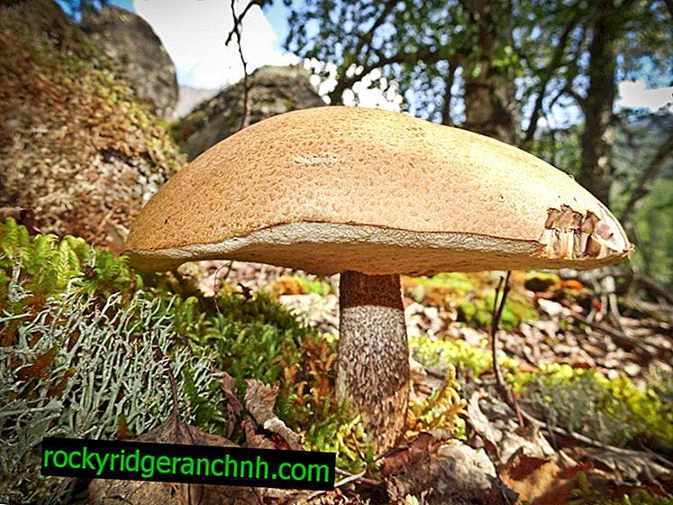 Tecnologia di ricerca dei funghi