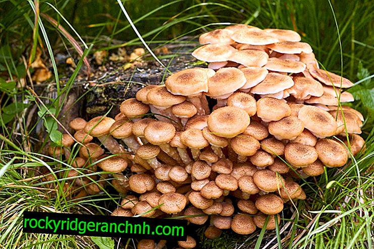 Mushrooms on stumps