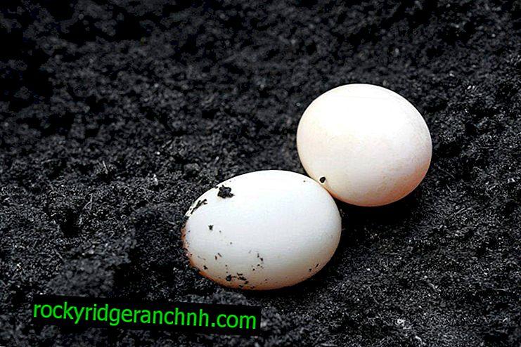 ประโยชน์และโทษของไข่