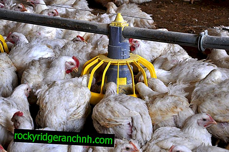 La construcción de un comedero para pollos
