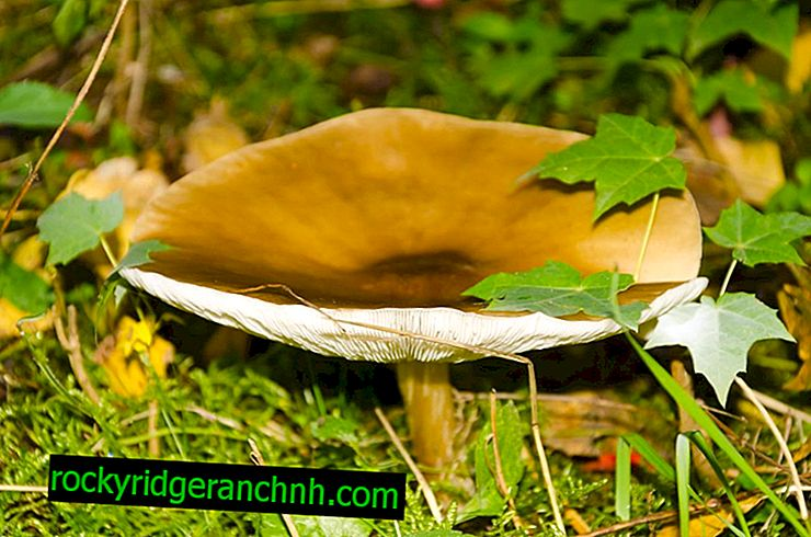 Cogumelos em maio