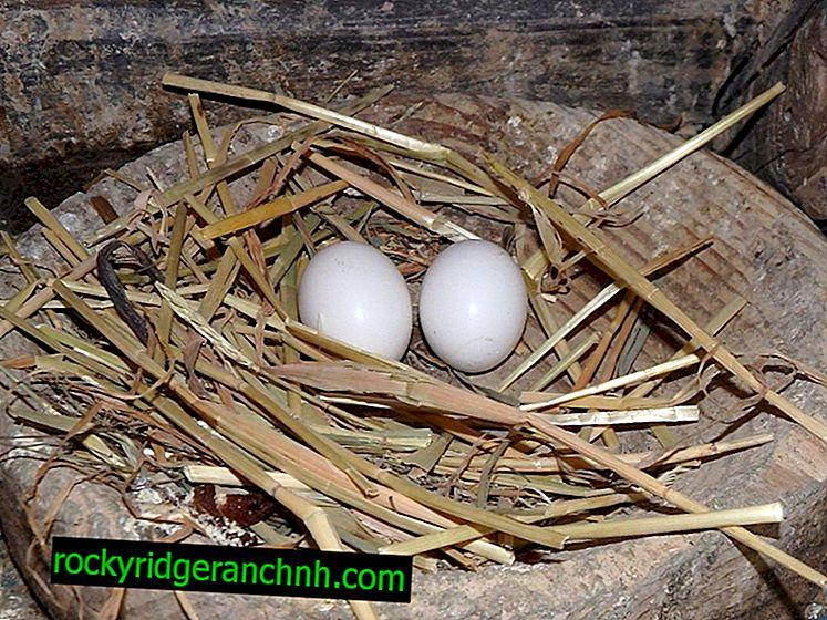 Kako napraviti gnijezdo za golubove